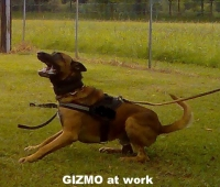Gizmo vom Saggautal - simpley the Best